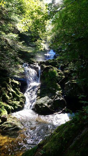 Spiritual forest in Ariège Stream Rock Stone Woods Waterfall Calm