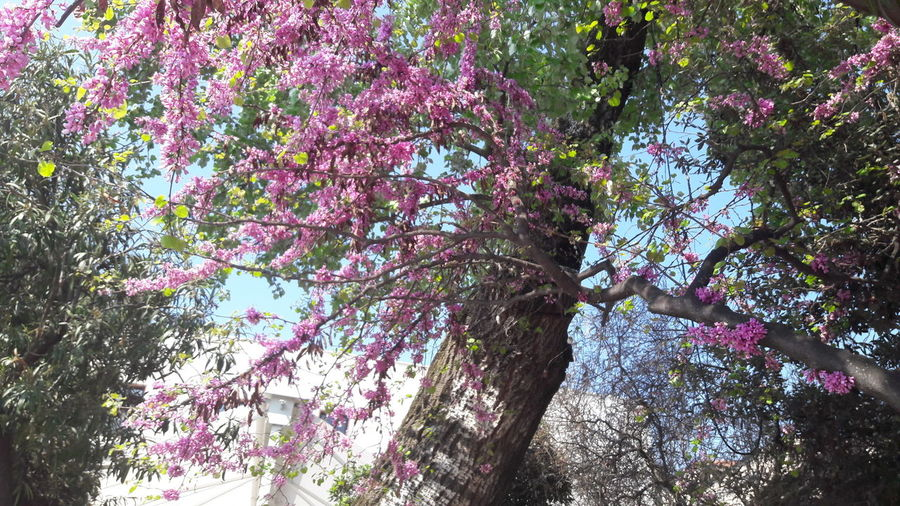 Tree Growth Nature Low Angle View Beauty In Nature No People Day Outdoors Branch Freshness Backgrounds Sky Close-up