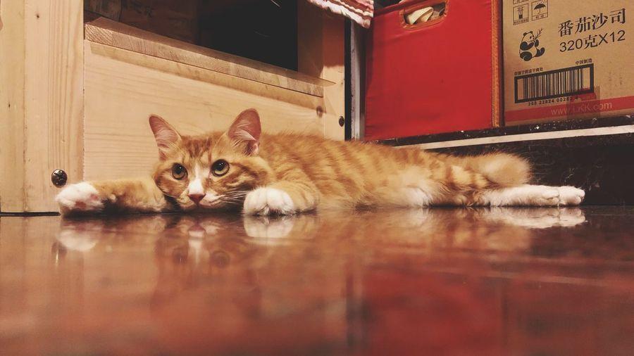 Mammal Cat One