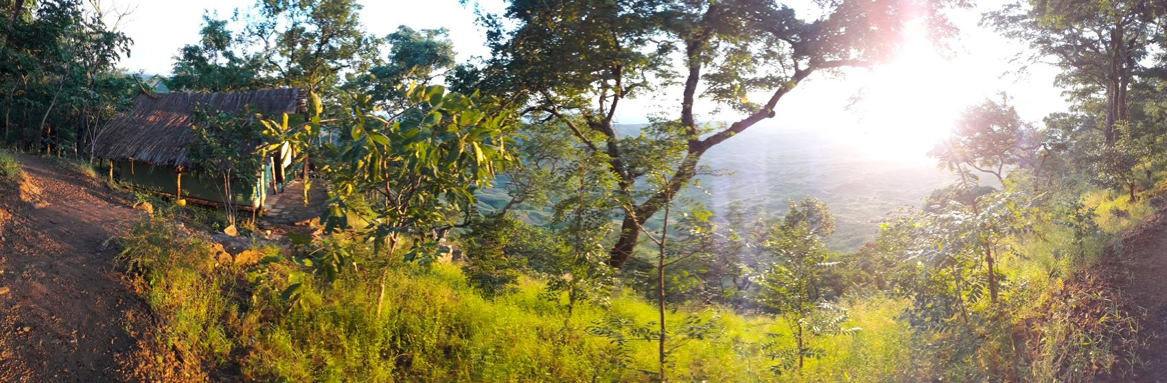 Sunrise 🌅 Tree Growth Nature Sunlight Low Angle View Freshness Beauty In Nature No People Forest Landscape Lake View Sunrise Collection 2017 Sunbeam Capture The Moment Sunrise Silhouette Tranquility Mountain Range Malawi Travel Photography No Filter, No Edit, Just Photography Green Color Beauty In Nature Scenics Tent Mountain Hikingphotography
