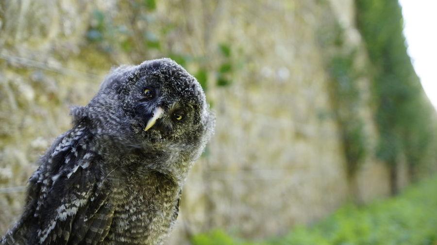 Close-up portrait of bird on tree