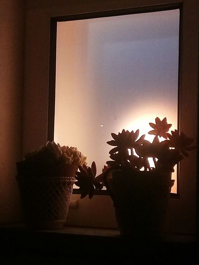relaxing time. Window Sill Succulent Plant Potted Plant Houseplant Aloe Vera Plant Flower Pot Pot Window Box Poppy Cactus Blooming Growing Prickly Pear Cactus HUAWEI Photo Award: After Dark