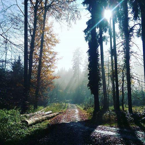 Sonne Wandern Speckwegpfad Zürich Planetenpfad Swissalps üetliberg Herbst Nebel Fog Tree Laub Fettwegpfad Sonnenspiel Fog Herbst Sunny Neblig Wald Planetenpfad Albis Swissalps Swizerland