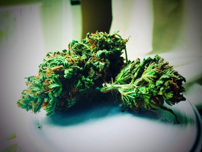 Weed Weed Life Cogollo Marihuana Smoke Smoke Weed