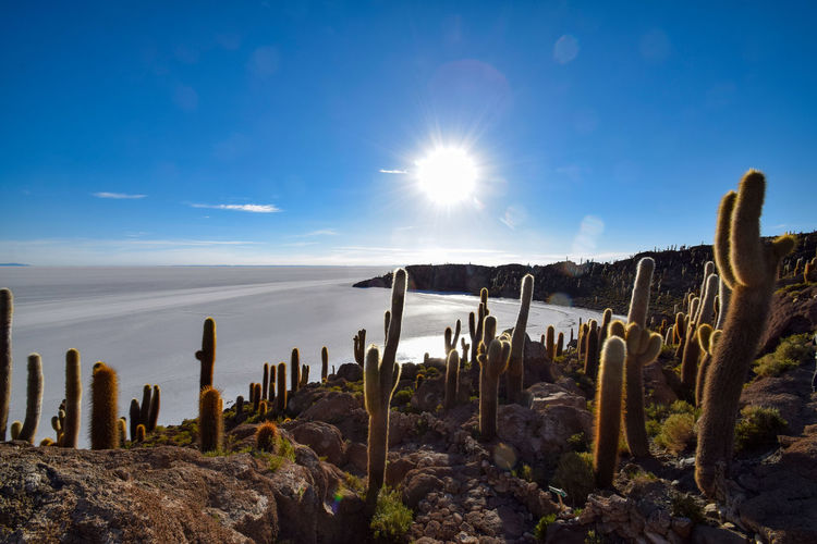 Scenic view of cactus against sky