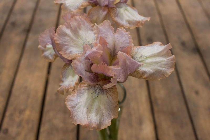 Flower Flowering Plant Fragility Vulnerability  Plant Close-up Beauty In Nature Growth Freshness Wood - Material Petal No People Flower Head Inflorescence Nature Outdoors Focus On Foreground Day High Angle View Selective Focus Pollen Iris - Plant