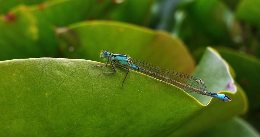 Eyeem4photography Water_collection Dragonfly EyeEm Nature Lover when the fly, congeurs the dragon..... you get a dragonfly...