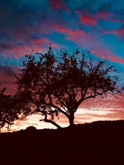 Tree Silhouette Beauty In Nature Sky Nature Sunset Scenics Tranquility Branch Tranquil Scene No People Outdoors Growth Lone Low Angle View Day