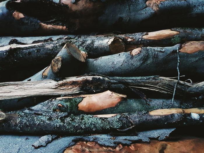 Log Wood Low