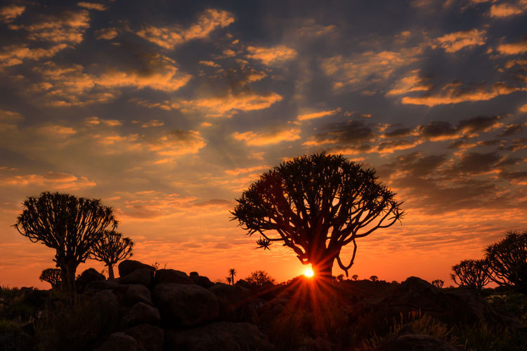 Beauty In Nature Cloud - Sky Dramatic Sky Namibia Nature No People Outdoors Quivertree  Scenics Silhouette Sky Sunset Tree Nature_collection Nature Photography