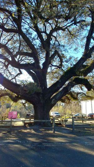 Tree Street Sky