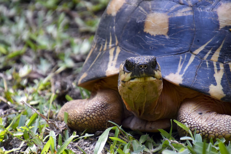 Don't know what species it is Animal Animal Body Part Animal Head  Animal Themes Animal Wildlife Animals In The Wild Close-up Day Field Grass Land Nature No People One Animal Outdoors Plant Reptile Tortoise Tortoise Shell Vertebrate
