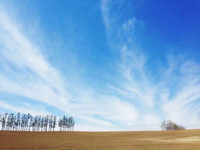 Hokkaido Sky Landscape Environment Plant Cloud - Sky Land Tranquility