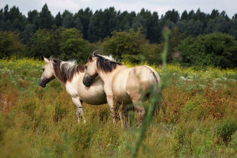Animal Animal Themes Mammal Plant Livestock Group Of Animals Animals In The Wild Animal Wildlife