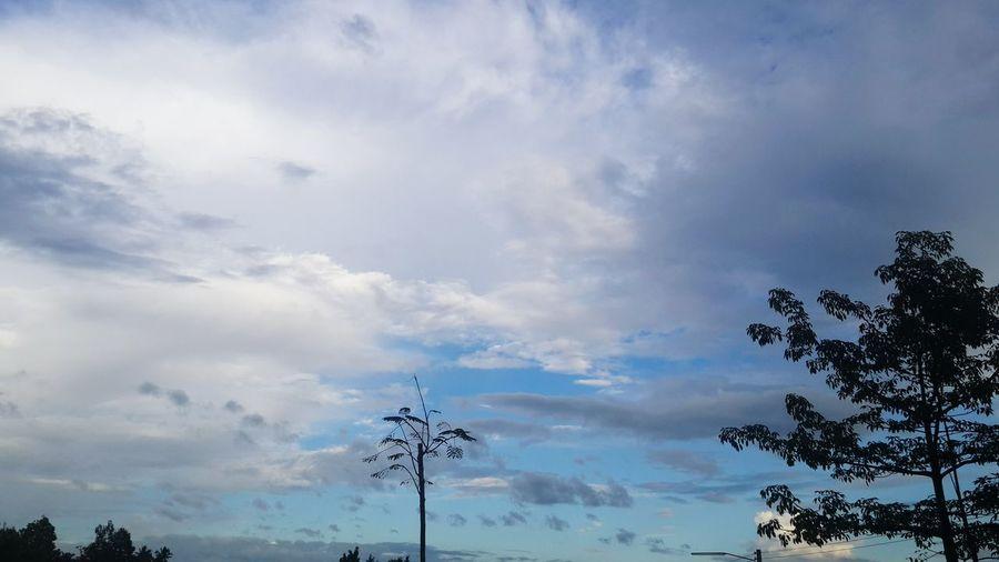ท้องฟ้า Tree Sky No People Beauty In Nature Silhouette Low Angle View Nature Sunset Outdoors Day