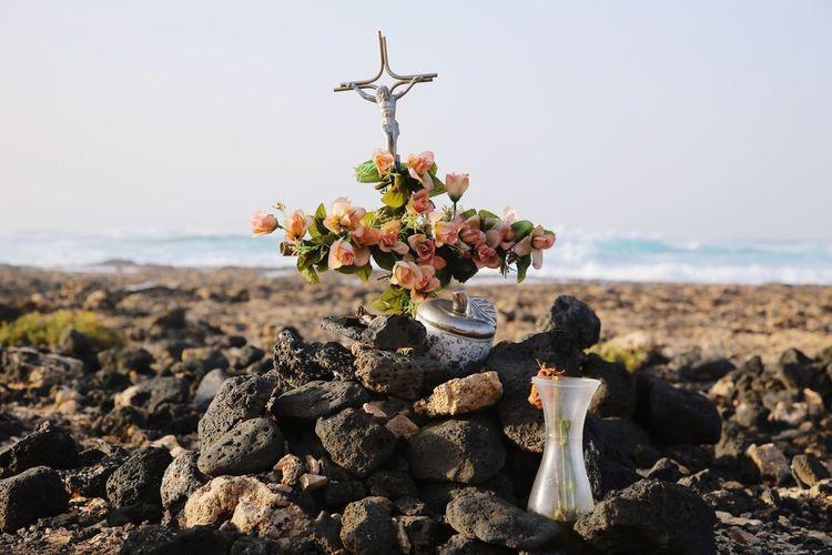 Cruz The Week on EyeEm Flower Sea Beach Clear Sky Rock - Object Sky Close-up Landscape Thorn Symbolism