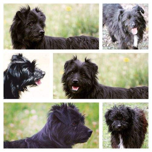 The collage of Muttley :) Collage Muttley Dogs Dog Cute Pets Cute Lovemydog