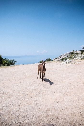 Donkey Donkey Croatia Land Sky Clear Sky Beach Nature Sea Mammal Animal Animal Themes