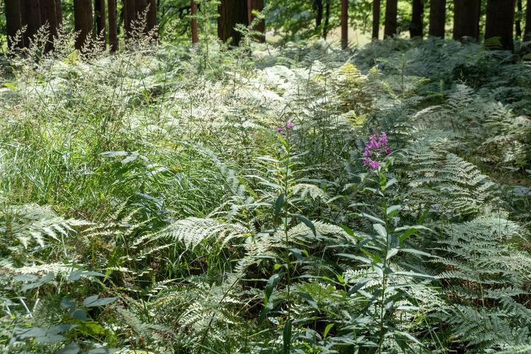 Plants growing on field in forest