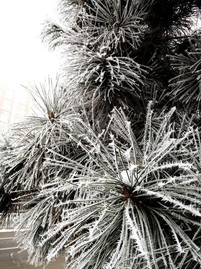 中国 呼和浩特 雾霾 雪后