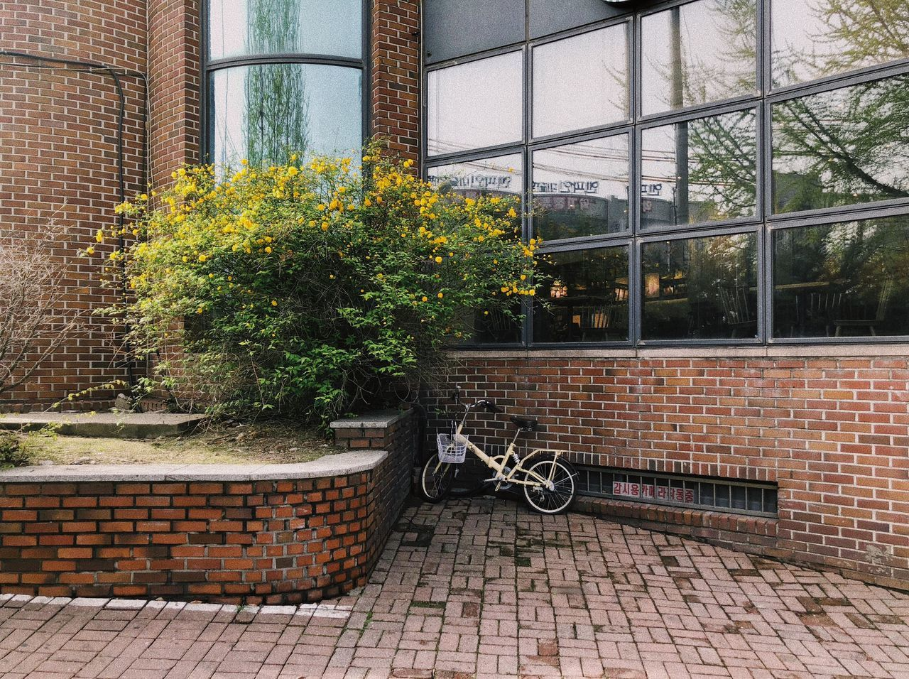 architecture, building exterior, built structure, plant, bicycle, brick wall, wall, brick, transportation, mode of transportation, window, land vehicle, day, no people, building, tree, stationary, city, outdoors, wall - building feature