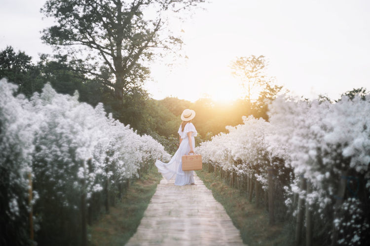 Full length of woman standing amidst flowering field during sunset