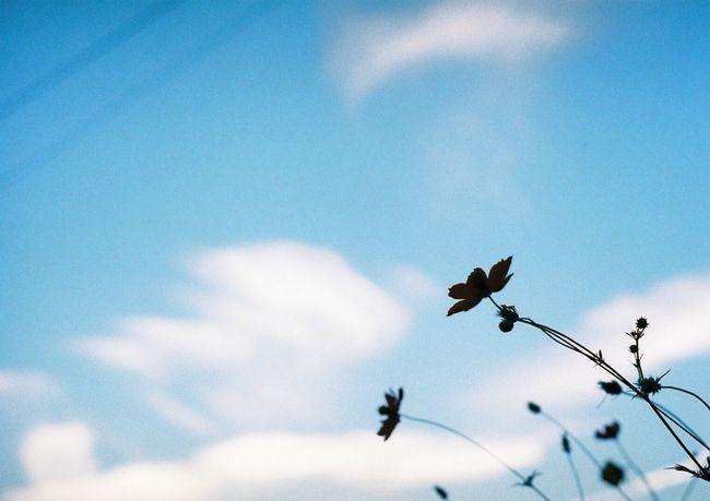秋がアッと言う間に終わる… Sky Film Photography Sky_collection Filmcamera Flowerporn Skyporn 35mm Film Natura1600 Asahi Pentax Spotmatic