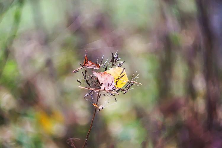 Dry leaf on