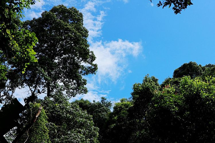 Tree Nature Sky Growth Day Cloud - Sky Forest Outdoors Low Angle View No People Beauty In Nature Leaf Scenics Branch