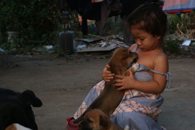 Puppies are hugging baby girl Domestic Mammal Domestic Animals One Animal Vertebrate Child Childhood Real People One Person Pets Livestock Girls Women Females Focus On Foreground Outdoors Innocence Little Girl Babygirl Dog Puppy Whell Care