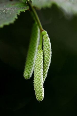 Green Color Close-up Plant No People Nature Growth Focus On Foreground Outdoors Beauty In Nature Plant Part Leaf Day