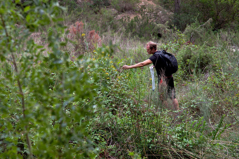 Man picking wild blackberries, Tarragona, Spain. Holiday Horizontal July Man Manhattan Countryside Foraging Foraging For Food Growth Landscape Lifestyles One Person Outdoors Picking Plant Real People Summer Vacation Wild Wild Fruit