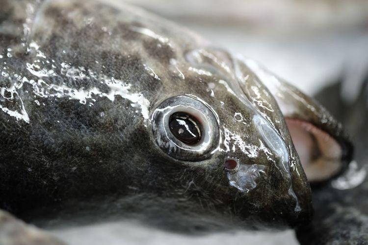 Fish head at