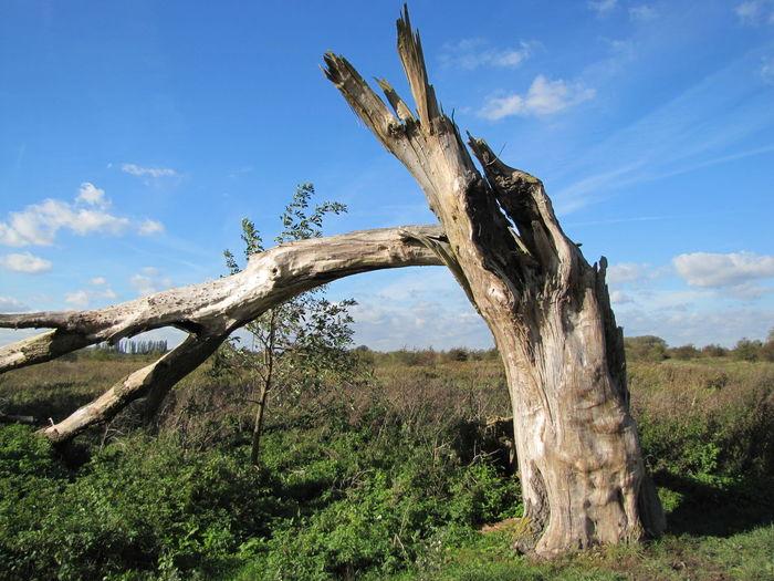 Tree trunk in desert against sky