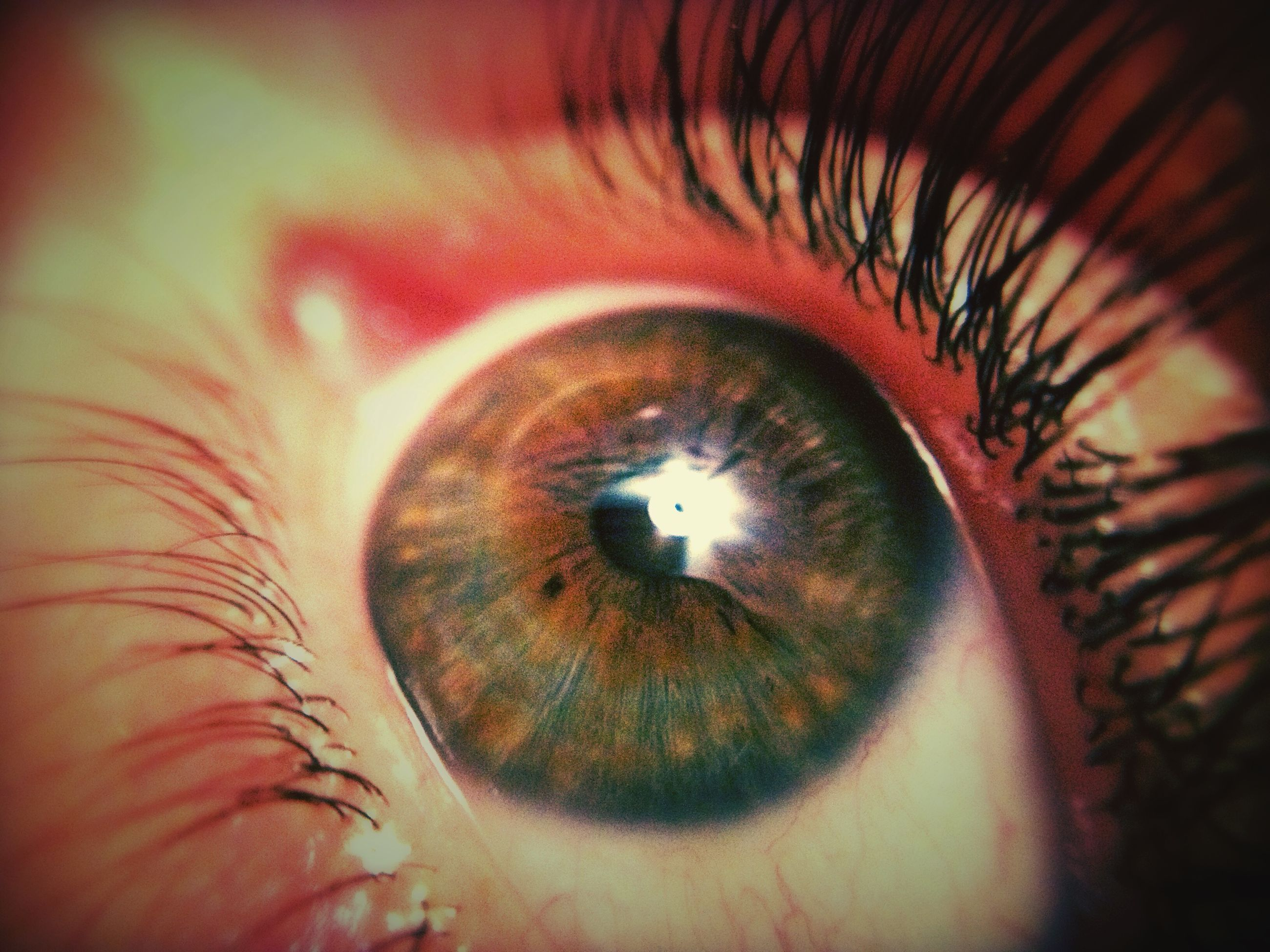 human eye, close-up, indoors, eyelash, eyesight, extreme close-up, sensory perception, part of, circle, full frame, unrecognizable person, extreme close up, selective focus, iris - eye, backgrounds, detail, eyeball