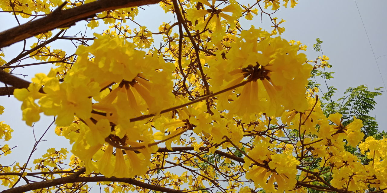 Tree Flower Flower Head Branch Yellow Leaf Autumn Full Frame Sky Close-up