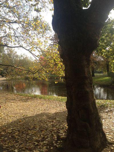 Autumn Tree Water 2014 No Filter Amsterdam Netherlands Vondelpark