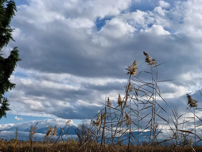 Cloud - Sky Sky Nature Day No People Tranquility Tranquil Scene Scenics - Nature Non-urban Scene Outdoors Environment Pamukkale Pamukkale/Turkey Turkey Overcast Field Beauty In Nature Plant Growth Mountains Mountain Range Dried Grass Dry Grass The Minimalist - 2019 EyeEm Awards