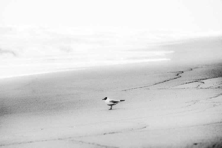 Seagulls on a land