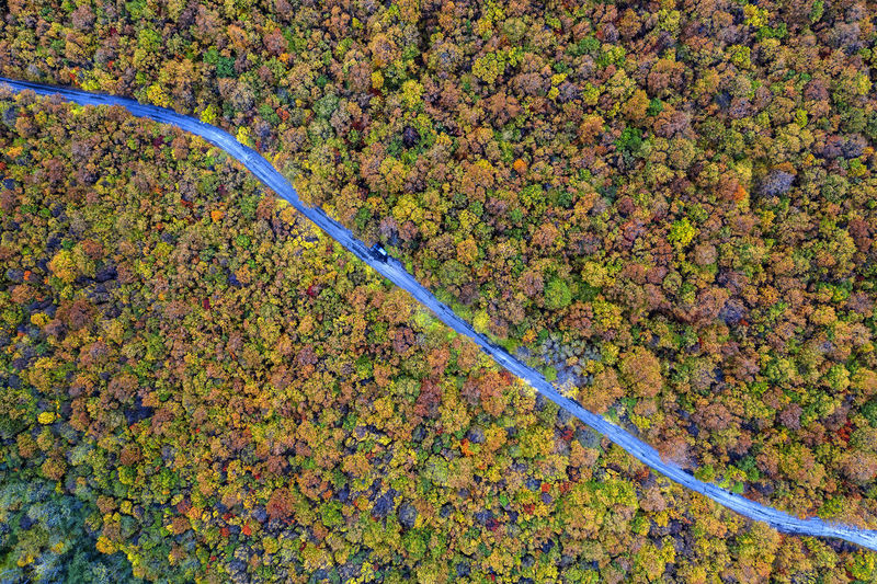 High angle view of autumn leaf on road