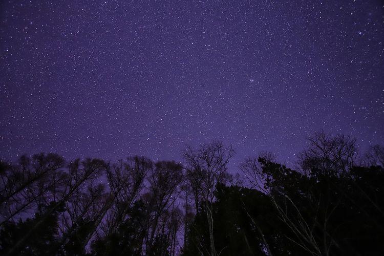 この夜降ったのは星☆今朝降ってるのは雪❄もうすぐ春!きっと春❗ 銀河鉄道の夜♪ Astronomy Galaxy Space Milky Way Tree Star - Space Constellation Star Trail Star Field Purple