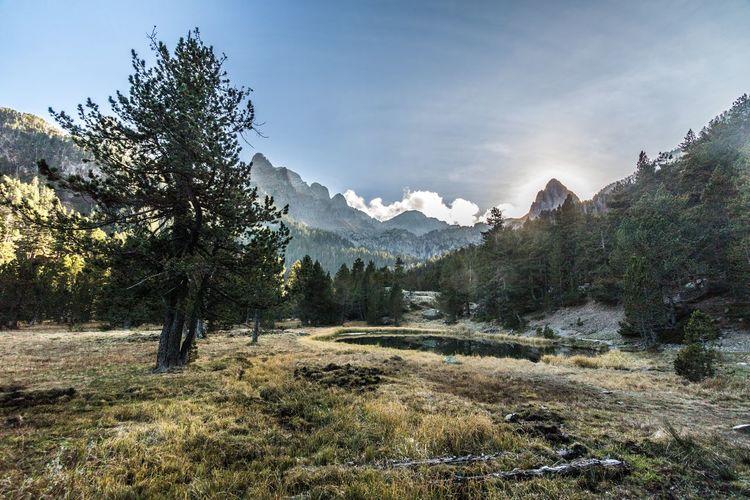 Ibonet de Batisielles Huesca España🇪🇸 Aragón Mountain Tree Nature Beauty In Nature Outdoors Scenics Snow Pinaceae No People