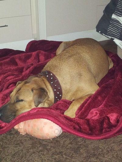 Charley Dog Bestfriend SpoiltWithLove