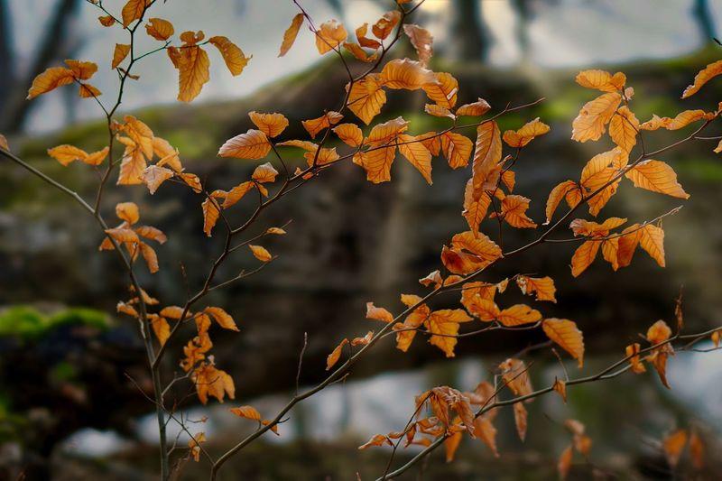 Ein Sonnenstrahlen eingefangen... Sonnenlicht Wald Niedersachsen Salzgitter Best EyeEm Shot Plant Focus On Foreground Growth Beauty In Nature Close-up Leaf Tree Nature Sunlight Autumn
