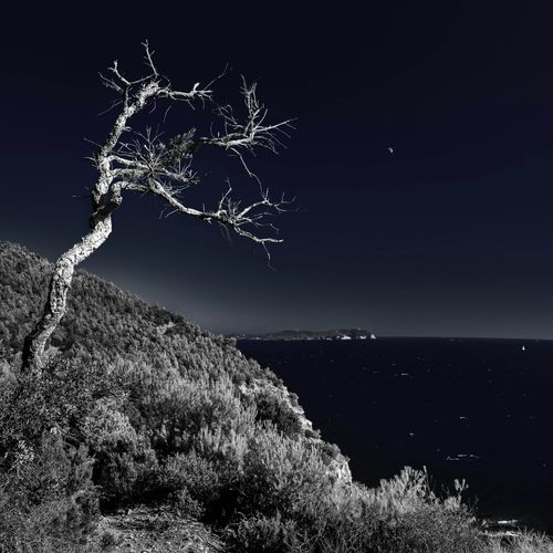 France Provence Massif De La Colle Tree Landscape Seascape Nikon D810