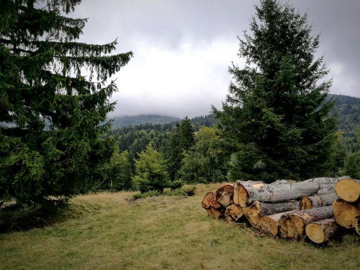 Cloudy forests Tree Stack Log Timber Nature Cloud - Sky No People Deforestation Outdoors Sky Mountain Landscape Day Woodpile