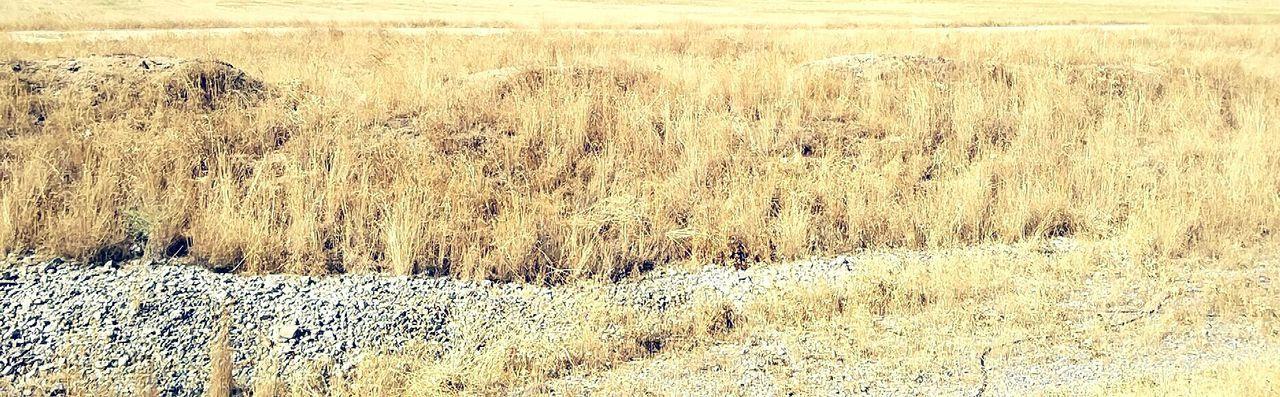 The field Grass