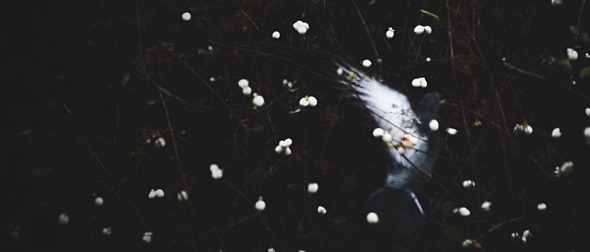 Likt en saga. Nature No People Outdoors Day Fragility Close-up Water Beauty In Nature Freshness Animal Themes EyeEmNewHere Pigeon