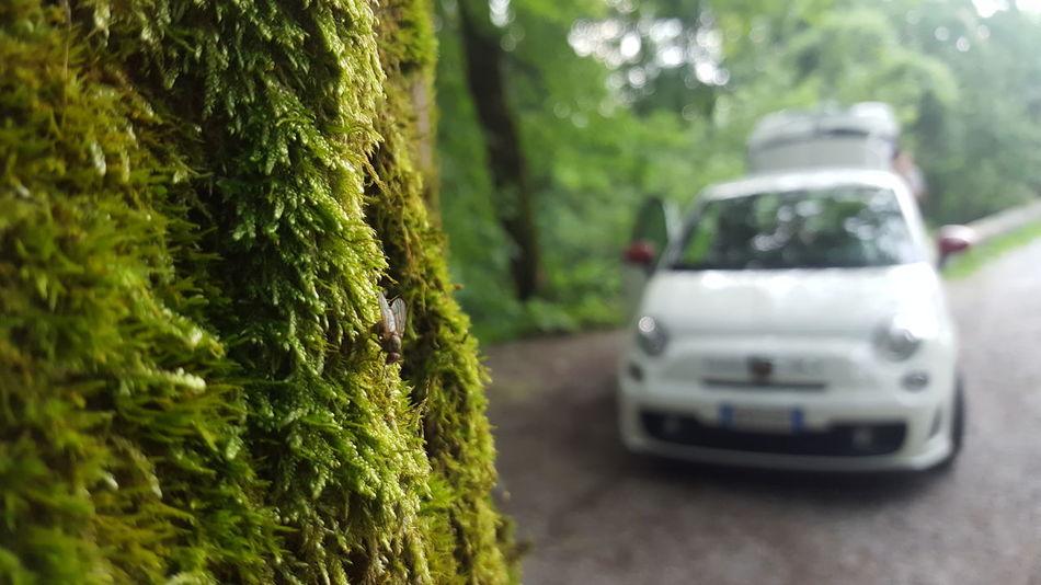 500 Fiat Cinquino Muschio Verde Automobile Mosca Fly Sentiero Sanprimo Monte San Primo Lagodicomo