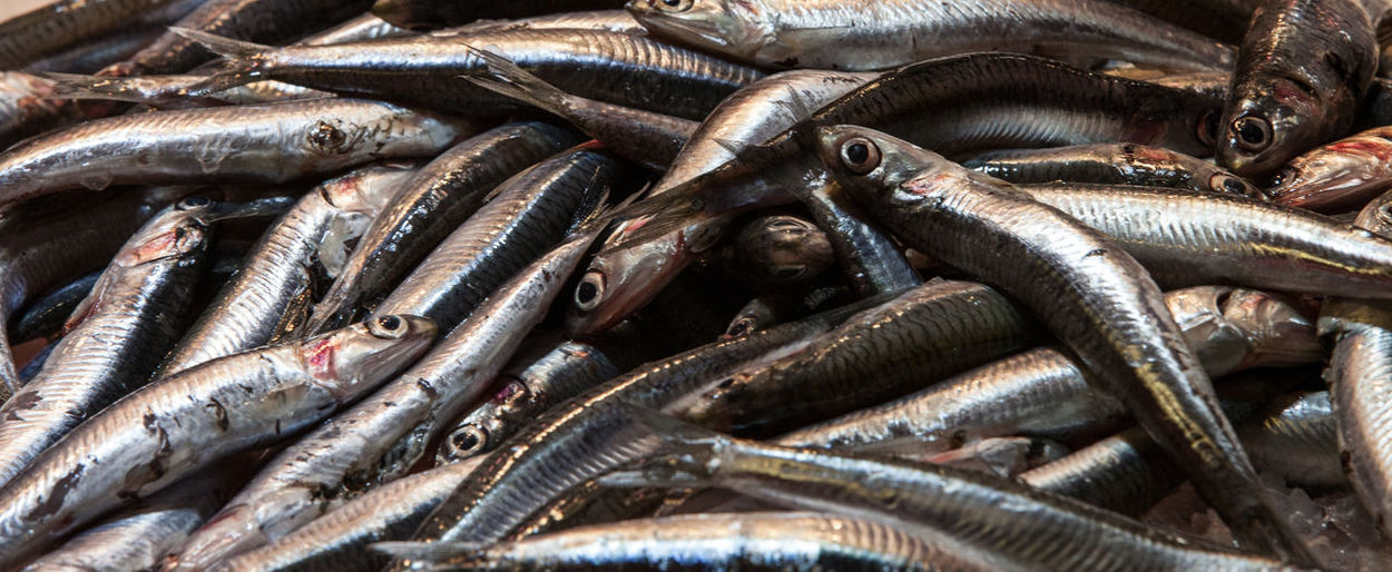Sardines Fish Raw Food Food And Drink Freshness Wellbeing Food Market Backgrounds Large Group Of Objects Group Of Animals Fishing Industry Silver Colored Seafood Animal Healthy Eating Dead Market Boqueria